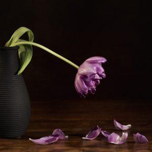 Better Gift than Flowers