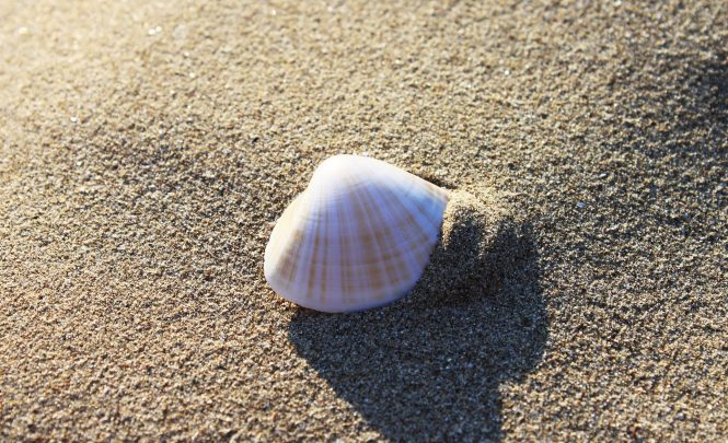 Store Your Seashells
