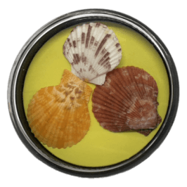 Collectible Shell Display Case